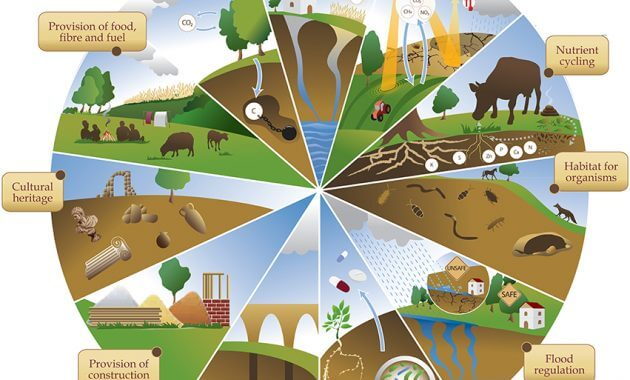 Ekosistem: Pengertian Ekosistem, Komponen Ekosistem, dan Macam-macam Ekosistem